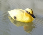 Baby Duck Floats - 3 pack